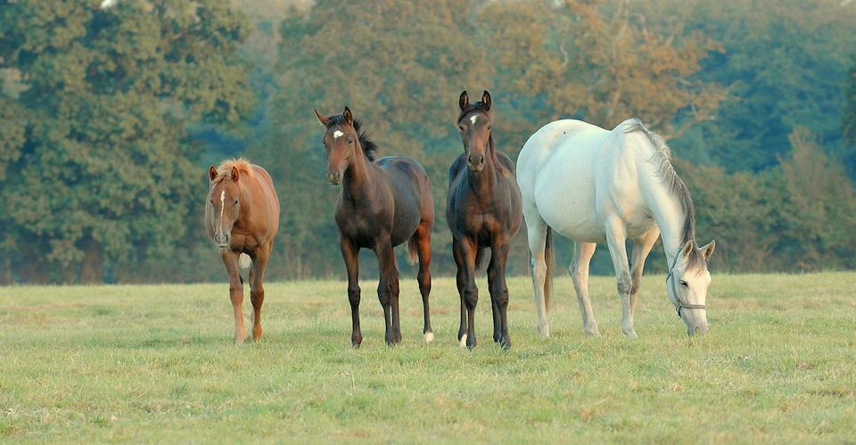 Notre philosophie - Connaissance approfondie des chevaux