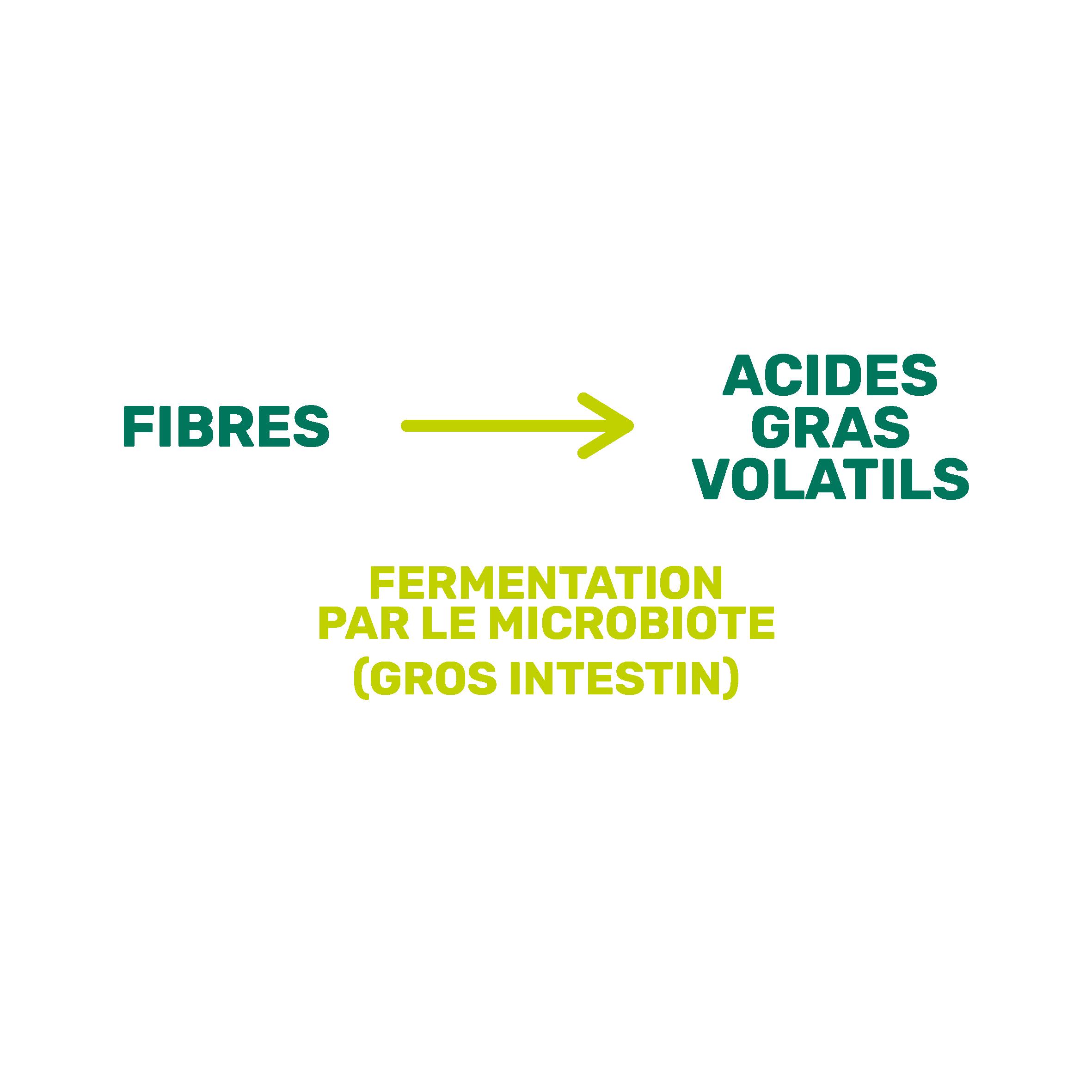 fibres acides gras volatils
